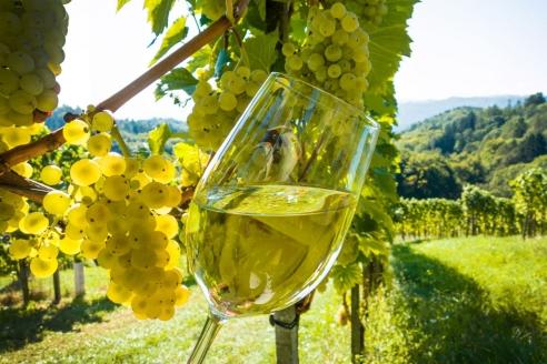 Виноградники для производства вин «Массандра»