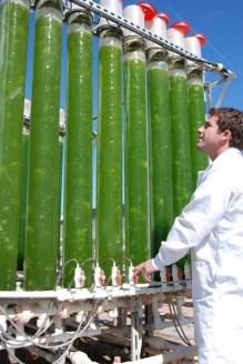 Исследователи из Государственного университета штата Аризона используют фотобиореакторы для получения биотоплива из водорослей
