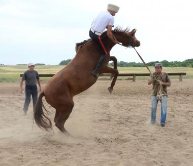 С. Винидиктов – объездка лошади